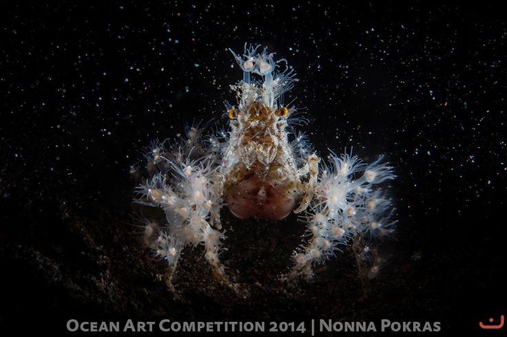 Электрический морской паук