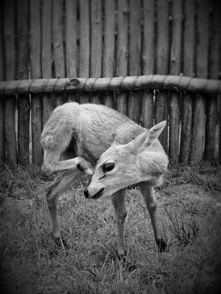 https://flic.kr/p/GDhPUe | Giulia #Bergonzoni #interesting #photography #cute #animals #Wildlife  #love