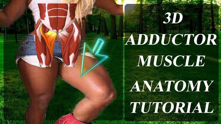 İÇ BACAK Kasları 3D İskelet Anatomisi  |ANATOMY ADDUCTOR |ENG.SUB.