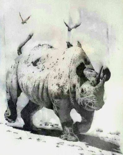 Rhino.... One of the African big Five. Medium: Black Rotring Ink Pen Technique: Stippling Size: A3 Available!