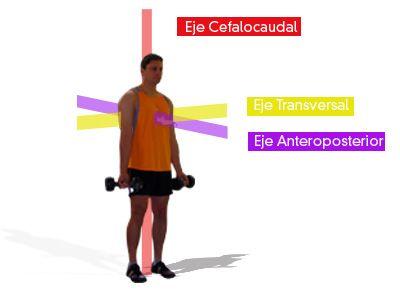 ejes y planos anatomicos - Buscar con Google