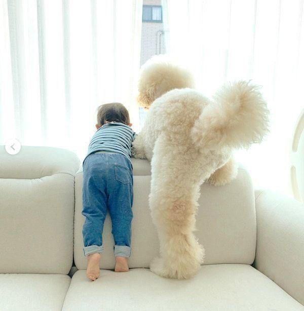 窓際のお尻がかわいすぎ ワンコと弟くんの微笑ましい姿に反響 いぬのきもちweb Magazine 犬 赤ちゃん ワンコ いぬ