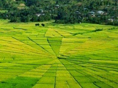 Sawah Jaring Laba-laba (Crop Circle)