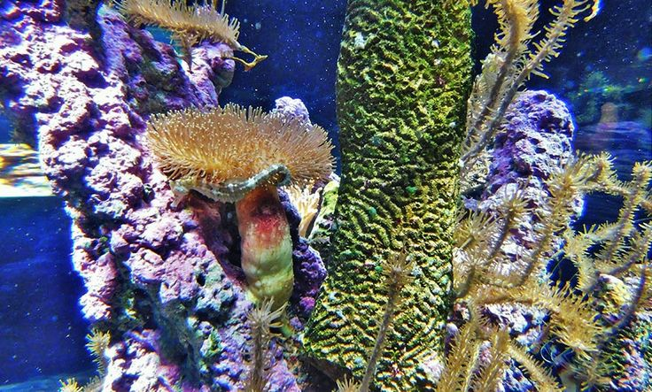 We like to be, under the sea, in an Octopus's garden – in Cherbourg – Normandy Then and Now. Our visit to the Cité de la Mer maritime museum in Cherbourg, #Aquarium