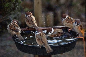 La atracción de la más amplia variedad de aves silvestres al patio de tu casa puede ser una divertida manera de combatir el estrés de la vida moderna. Una prática que puede lograrse de forma muy sencilla y económica, en solo cuatro pasos.