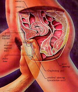 Image result for Sex Positions for Orgasm Diagrams