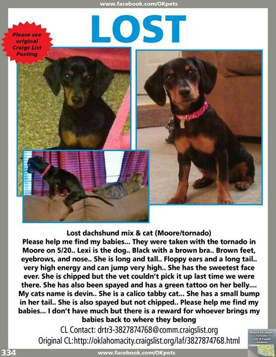 MOORE, OK TORNADO - LOST DACHSHUND - Please share