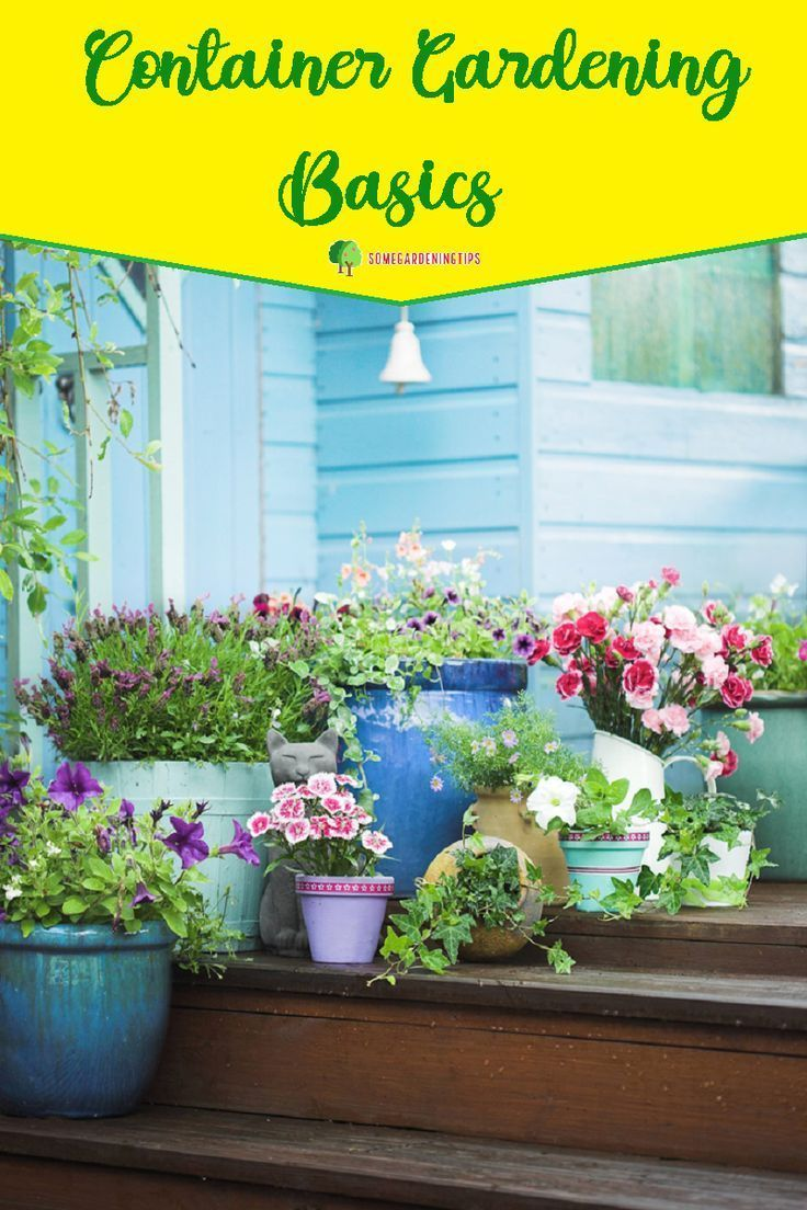 Container Gardening Basics For Your Urban Garden Container