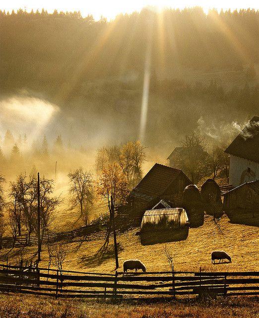 Morning farm beauty