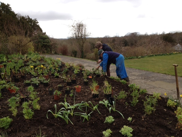 Colin and Wilf planting up the herbaceous border. www.halecat.co.uk
