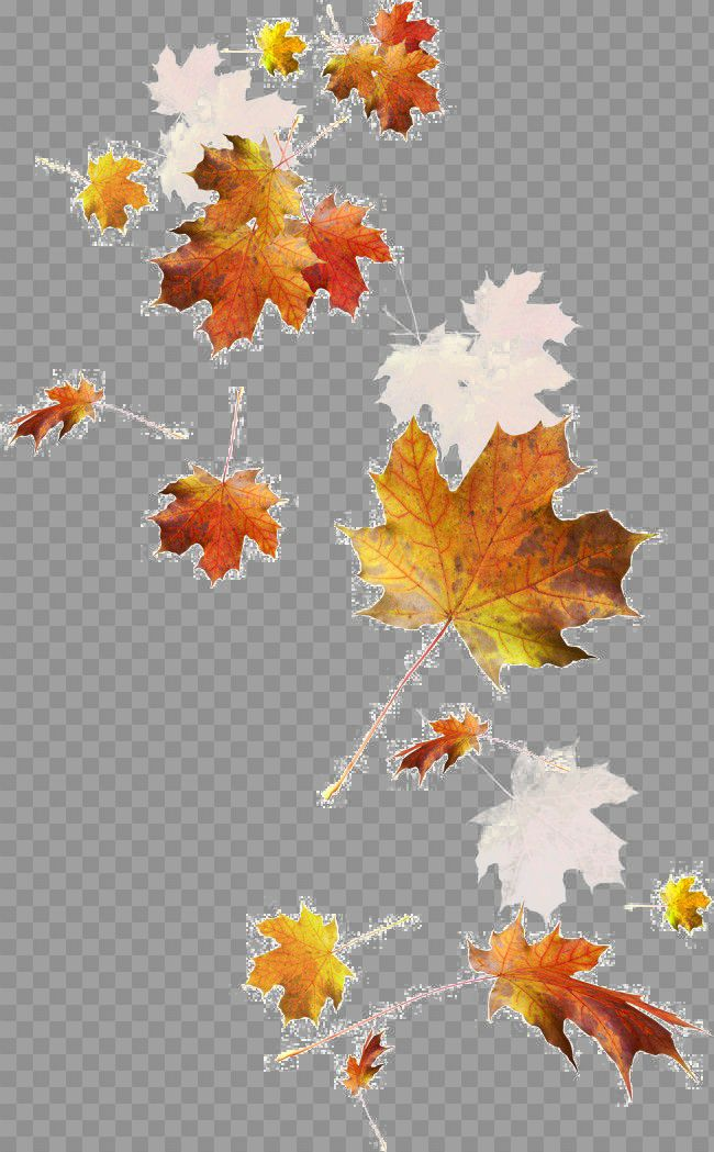 Falling Autumn Leaves Png Image Leaf Drawing Watercolor Autumn Leaves Botany Illustration
