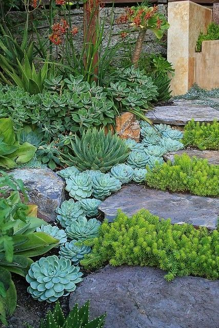 Succulents and rocks for added texture and dimension | Backyards Click