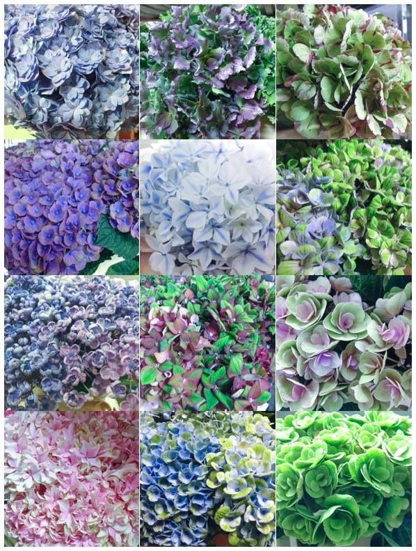 Hydrangea www.vandijkbloemen.nl
