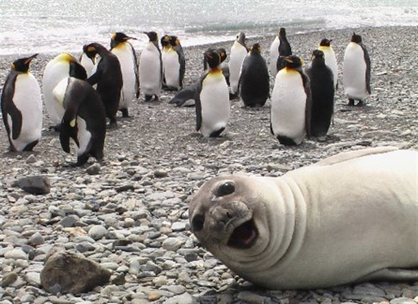 Even animals can photobomb. Hehe...