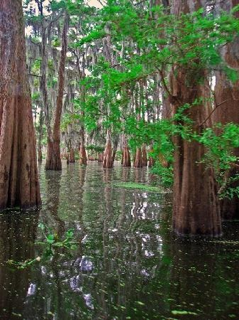 The Atchafalaya Experience - Swamp Tour - Lafayette..loving soon.