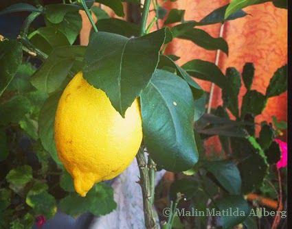 Lyckans smed - Samtidigt i MalinMatildas hjärna: Citroner gör det mesta möjligt!