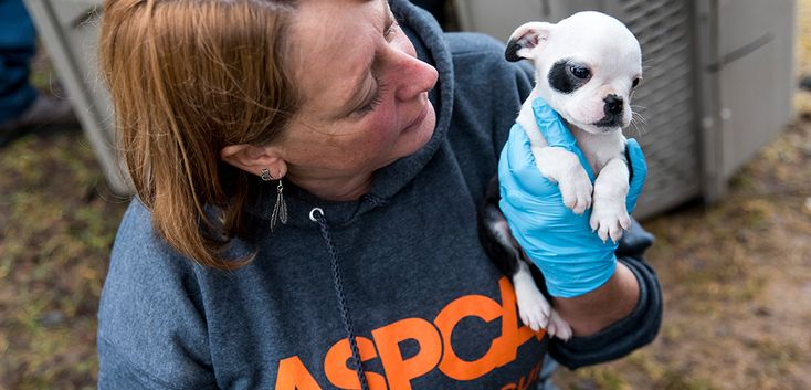 Rescued ! If pet store puppies or puppies sold on line weren't from a puppy mill , there would be no reason to rescue ....think about that