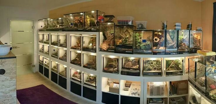 17 Best Ideas About Reptile Room On Pinterest Reptile