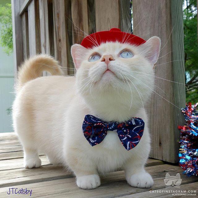 Pin On Cat Treats