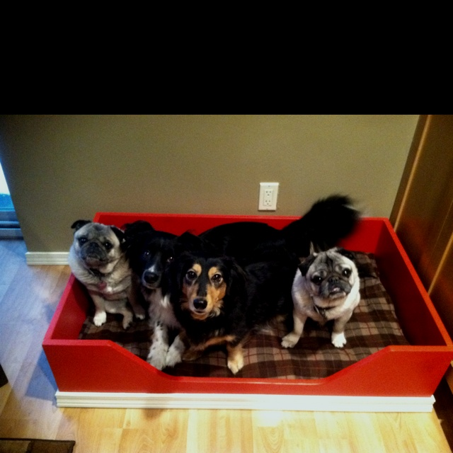 Homemade Dog Bed Fun Funny Pinterest Homemade Dog Bed Homemade Dog And Dog Beds