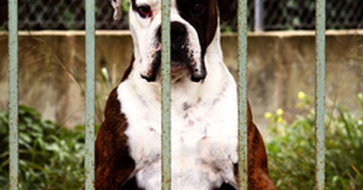 ¿Cuándo debe darse la primera vacuna a los cachorritos?. Al igual que los bebés humanos, los cachorros nacen con un cierto grado de inmunidad a enfermedad que reciben de sus madres. Sin embargo, la inmunidad natural innata se desvanece, y los cachorros deben ser vacunados contra enfermedades como parvovirus, moquillo y rabia. Se necesitan una serie de vacunas para que un cachorro tenga una protección ...