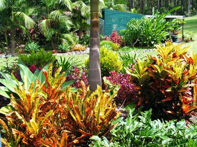 Australian gardening cubit: sub tropical gardening forum: Plants for a sub tropical climate