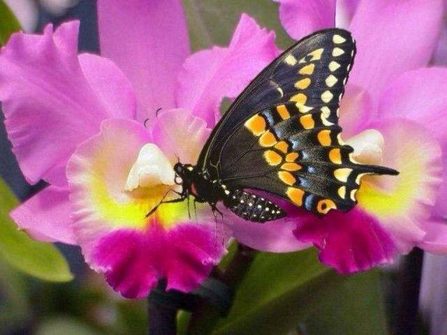 I colori della natura....
