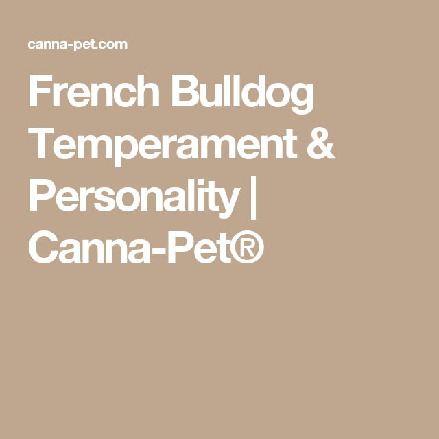 French Bulldog Temperament & Personality   Canna-Pet®