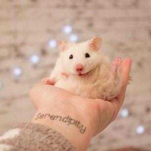 Foto de Melina Souza. Hamster branco sentado na palma da mão com as patinhas pra cima. Pulso com a palavra Serendipity tatuada.
