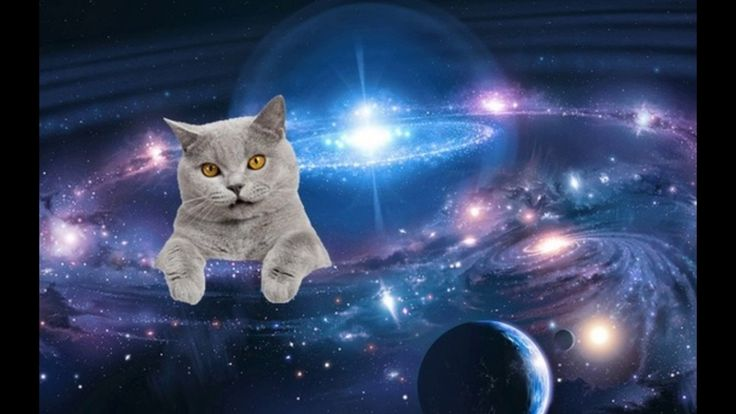 Yup Cats Totally Rule The Milky Way