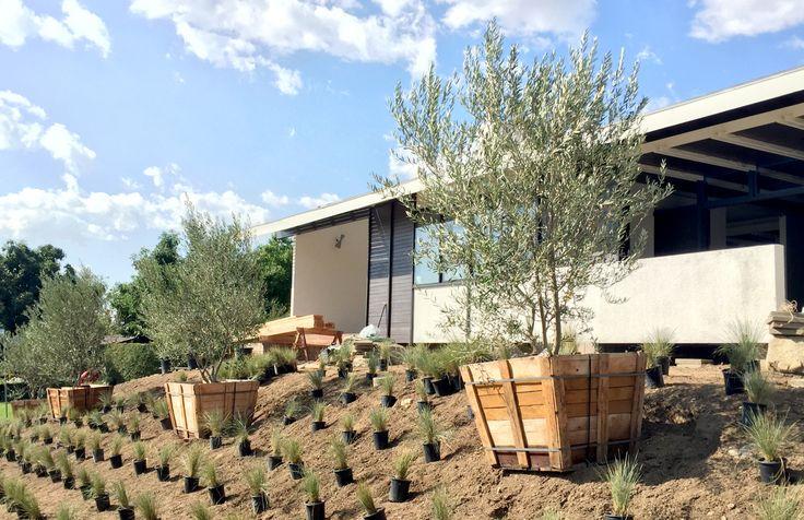 23 best jardin niel toulouse images on pinterest sun for Jardin niel