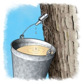Maple Syrup Science: Cooking Up Some Candy - Scientific American