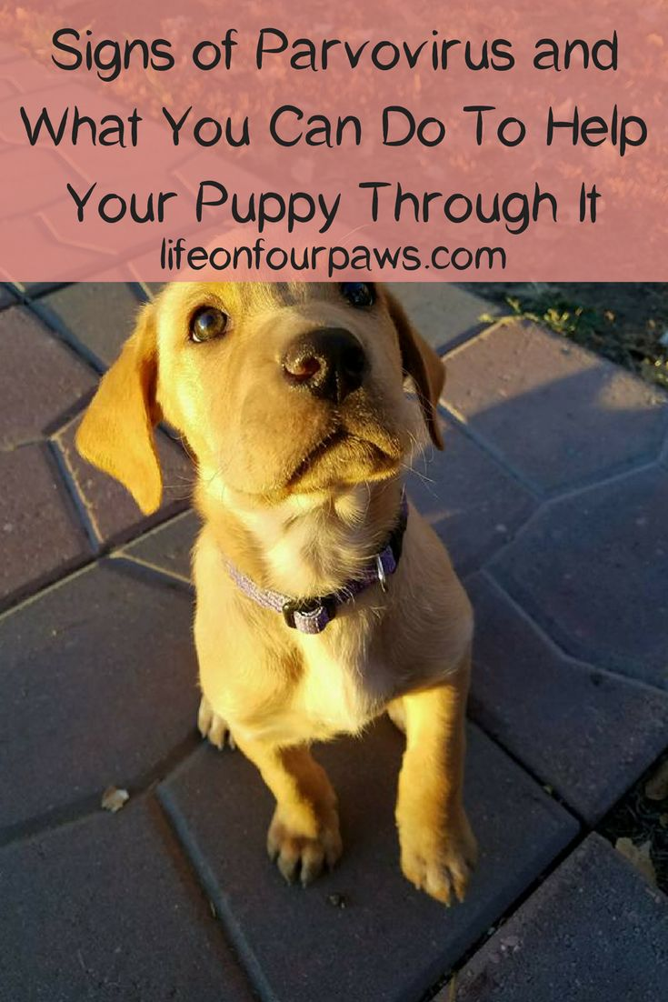 Pin On Pet Safety And Health Tips