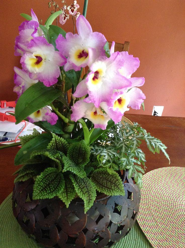 Mis arreglos de orquideas con begonias