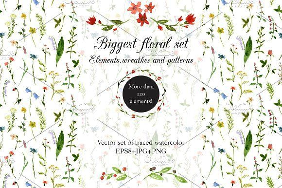 Biggest watercolor floral set by cat_arch_angel on @creativemarket