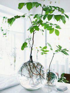 Nieuw: de indoor water- & luchttuin | Mooi wat planten doen