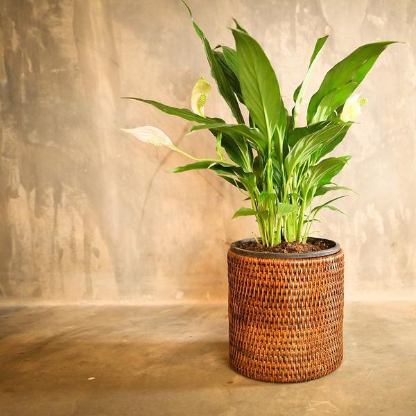 Rangoon Rattan Planter Small Brown
