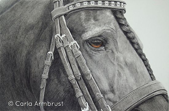 """Eye To Eye"" Friesian Stallion, Pencil drawing by Carla Armbrust, Horse, Stallion, Black Stallion, Domestic animal, farm animal, draft horse, Equine"