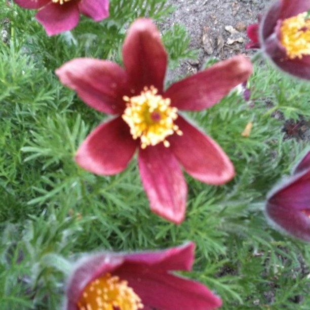 rood in de tuin