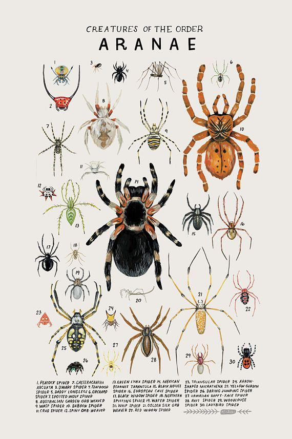 Creatures of the order Aranae vintage inspired science poster