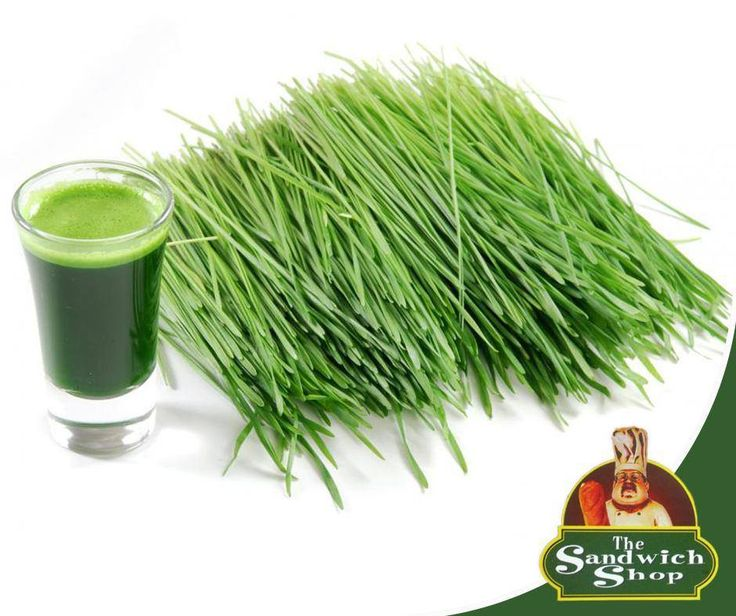 Go organic this winter with the wheatgrass juice from #JuiceWorx at The Sandwich Shop. It is the perfect add-on to your lunch and sets up your body with various health benefits and gives you a boost. Call us at 044 874 7480 or visit us in-store. #HealtyLivinghttps://www.facebook.com/thesandwichshopgeorge/photos/pb.288990491272186.-2207520000.1439136722./444149559089611/?type=3