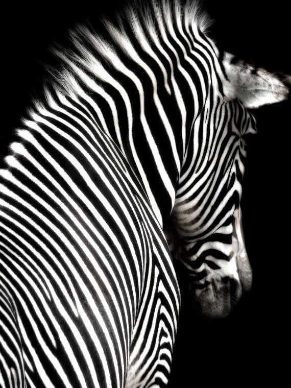 Zebra wall art art print impresión digital poster por Chachaprints