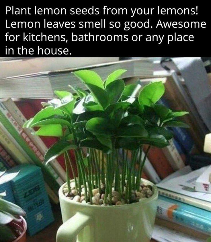 Kitchen Bench Herb Garden: Best 25+ Indoor Window Garden Ideas On Pinterest