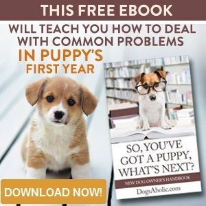 Best 25+ Indoor dog potty ideas on Pinterest | Puppy day care ...