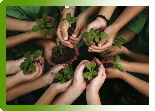 De Groene Zaak