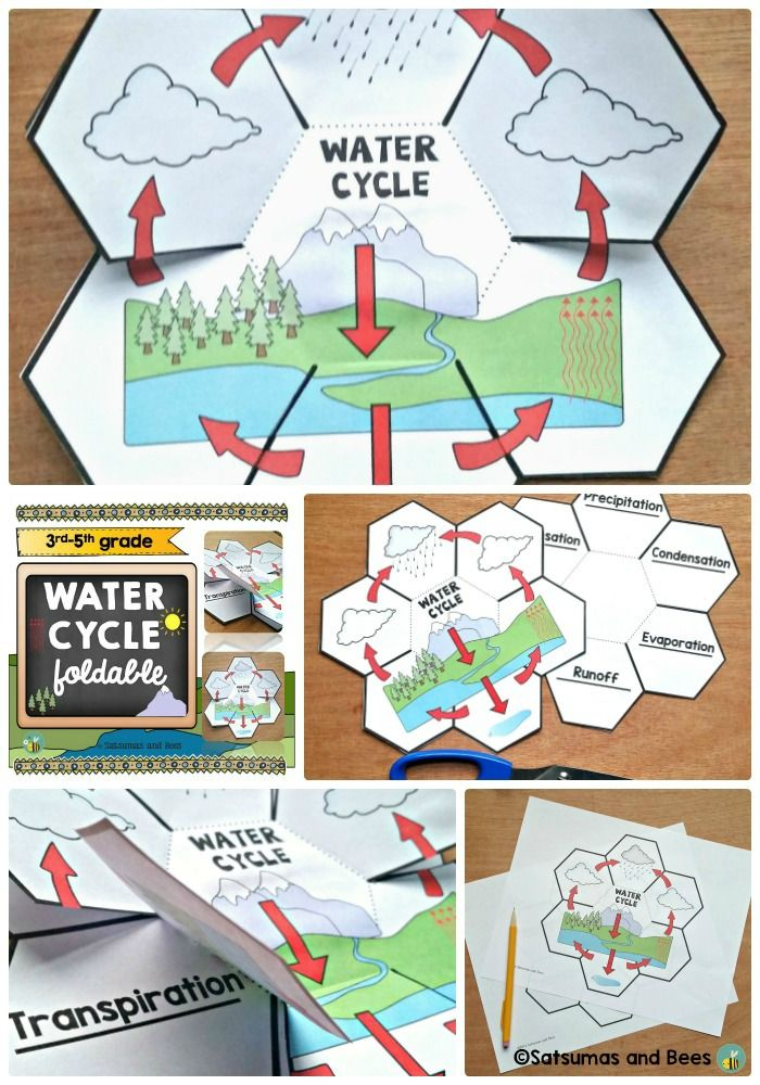 These foldables will help your students identify and remember the steps of the water cycle ( 2 differentiated versions are included for lower and upper grades). This resource may be used with students from grades 2-5. Perfect with whole group, small group or individual instruction. This resource is adapted to address different learning styles and was tested in my classroom (4th-5th grade).