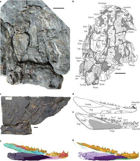 Evolution of tetrapods