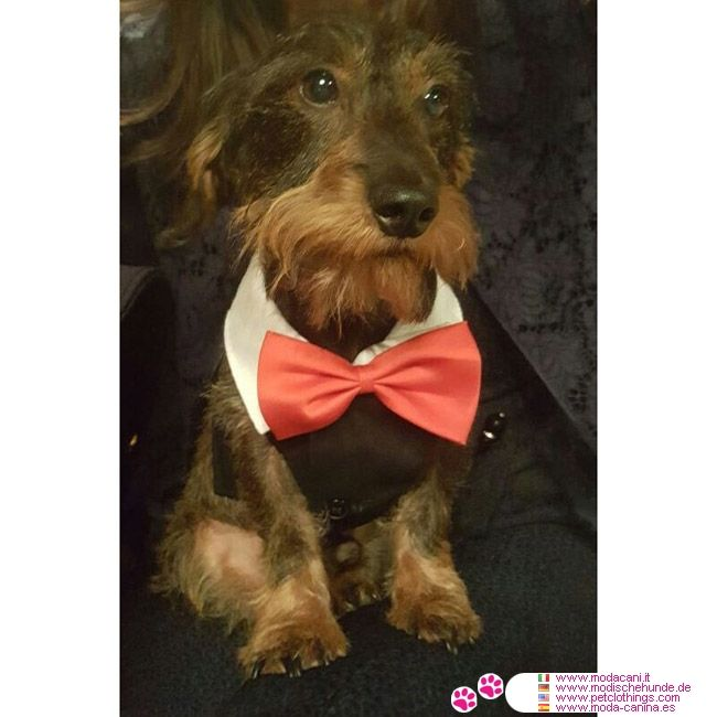 Smoking pour Petit Chien #VetementChiens - Smoking en coton avec doublure en nylon, avec le col blanc et le noeud papillon rouge pour Petit Chien: Chihuahua, Carlin, Caniche, Jack Russell