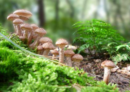 Legertje paddestoelen, army of mushrooms. http://www.kaartje2go.nl/kaartencollecties/creagaat---herfst?sk_id=161