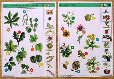 Soubor Logico Piccolo - Prvouka Prvouka - Rostliny v lese, na poli a v zahradě Soubor obsahuje 16 hracích karet, vždy s 10 úkoly. Karta se zasune do rámečku a barevné knoflíky se